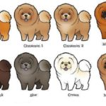 cores-do-chow-chow