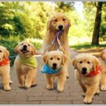 golden-retriever-familia