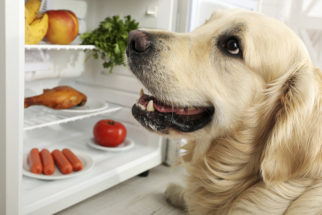 Pode dar frutas aos cães?