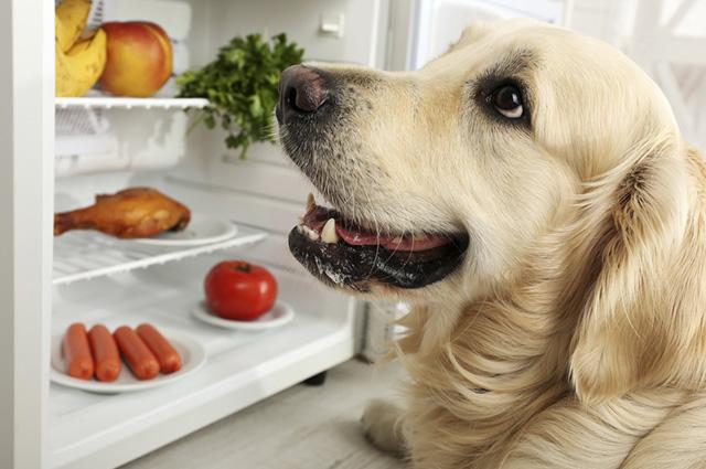 como fazer comida natural para cachorro