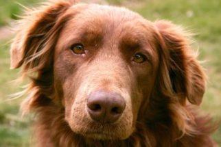 Cachorros idosos – Saiba todos os cuidados necessários