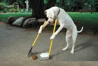 Como limpar xixi e cocô do cachorro no chão?
