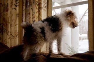 Dicas para deixar seu cachorro sozinho em casa