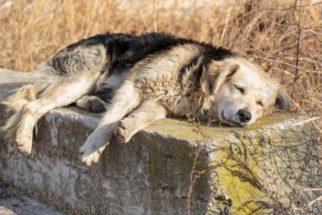 Linfoma em cães – Fique por dentro deste assunto