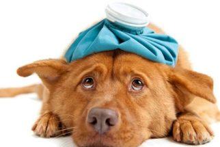 Pneumonia e pneumonite em cães