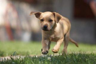 Raças de cachorro com mais energia