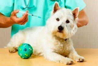 Vacinação nos cães – Tire todas as suas dúvidas