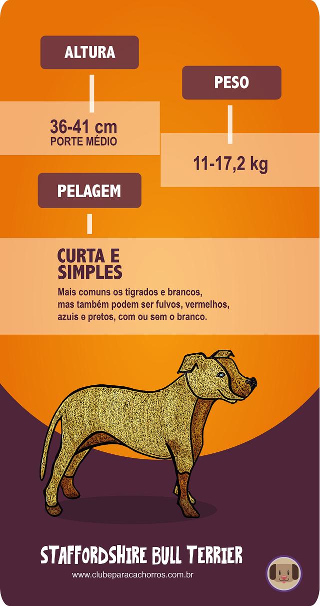 Staffordshire Bull Terrier, altura, peso e pelagem