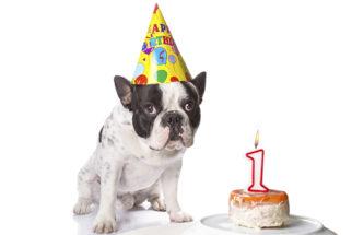 Como calcular a idade do cachorro?