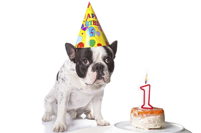 Para saber a idade do cachorro é preciso fazer dois cálculos considerando raça e peso