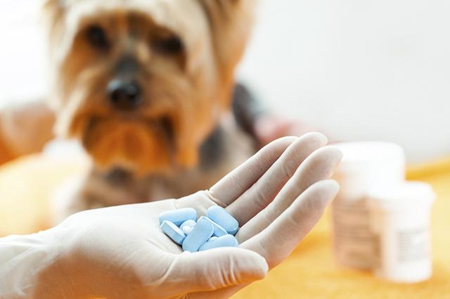 Existem duas técnicas simples para dar comprimidos para o cachorro