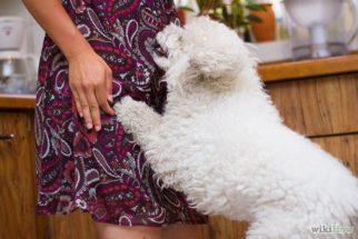 Cães pulando nas visitas – Como parar esse hábito?