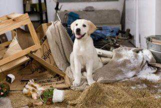 Como lidar com o cãozinho bagunceiro?