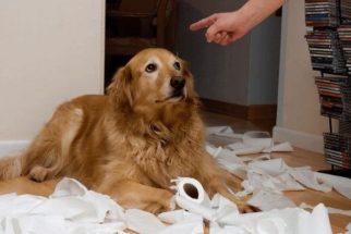 O cachorro fez algo de errado – Como devo corrigi-lo?