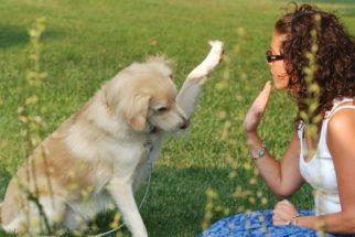 Qual é a melhor fase para adestrar o cachorro?