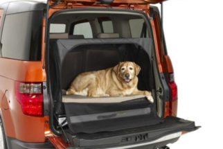 Viagem de carro com o cachorro