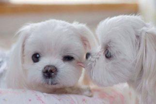Amor canino – Entre cães e humanos