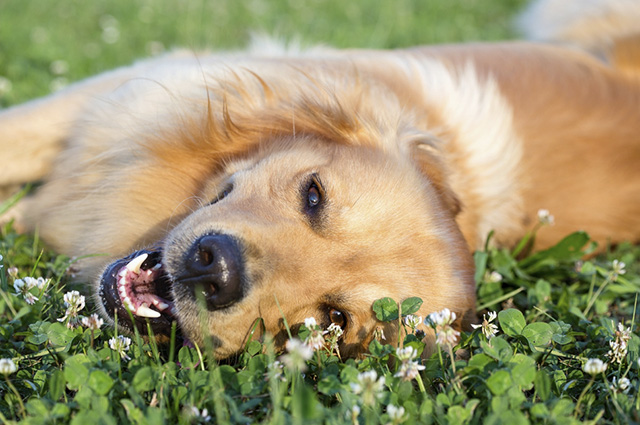 Os hormônios são tidos como uma das principais causas de câncer de mama em cadelas