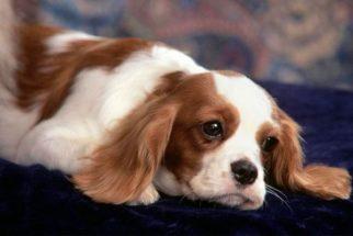 Como distrair cães que ficam sozinhos em casa?