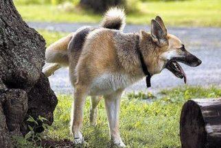 Como fazer o cachorro parar de marcar o território?