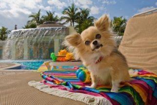 Hotel para cães – Agora você pode viajar tranquilo