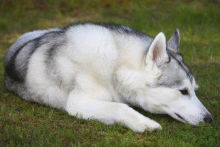 Artrite e artrose em cães