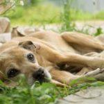 Câncer nos cachorros – Saiba tudo sobre esta doença
