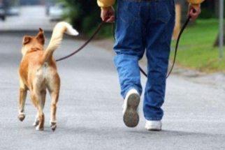 Como evitar que o cachorro puxe a coleira?