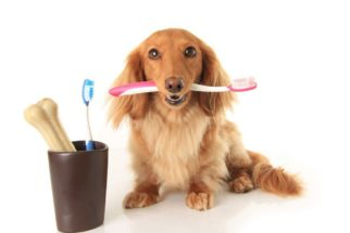 Cuidados com a saúde bucal dos cães