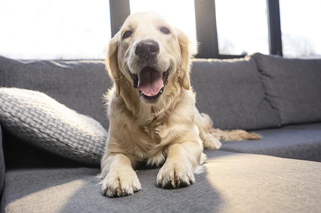 O anticoncepcional em cadelas pode desencadear uma série de patologias graves