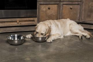 Como escolher o pote certo para o cachorro?