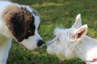 Socialização entre cães