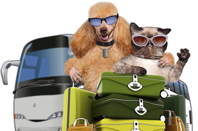 Viagem de ônibus com o cachorro só permite dois animais por veículo