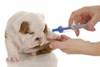 As primeiras vacinas para seu filhote