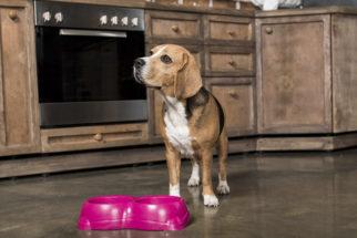 Ração ou comida caseira – Qual o melhor para o cachorro?