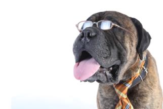 Cão idoso – Como alimentá-lo de maneira saudável?