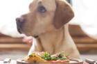 racao-ou-comida-caseira-qual-o-melhor-para-o-cachorro