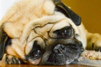 Atitudes dos donos que deixam o cão infeliz