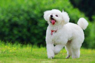 Os cães mais brincalhões