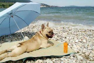Posso levar meu cachorro à praia?