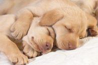 Quantas horas o cachorro deve dormir ao dia?