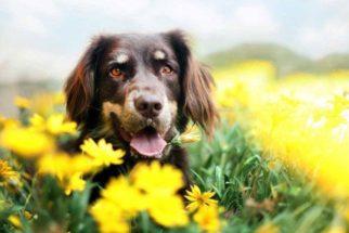 Rotina ideal para o cachorro