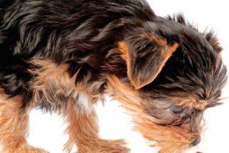 Suplementos para cães: tipos e indicações