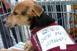Preconceito com cachorros entre a adoção e compra