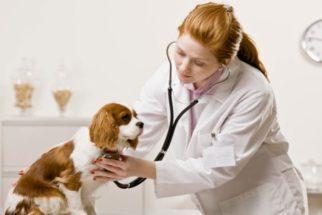 Veterinário já – Situações que pedem o doutor imediatamente