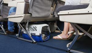 viajando-com-seu-cachorro-na-cabine