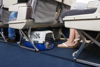 Viajando com seu cachorro na cabine do avião