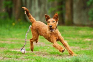 Brincadeiras para você fazer com seu cachorro