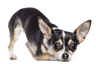Como conquistar a confiança de um cão?