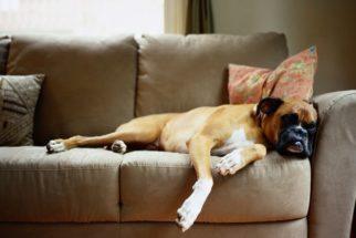 Como ensinar o cachorro a não subir nos móveis?